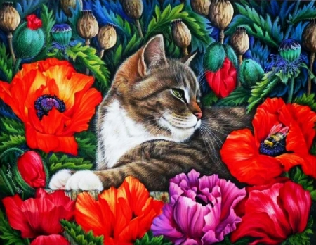 Kitty and Poppies - painting, flowers, resting, blossoms, cat, artwork