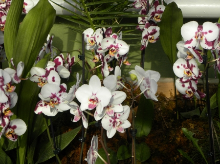 orchid - nice, orchid, flower, beautiful, park, sweet