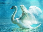 Graceful Swan!