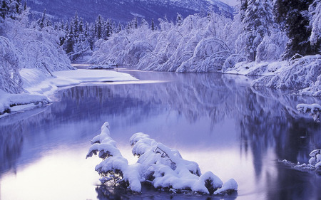 Winter Setting - snow, frost, winter, calm, forest, river, white, nature