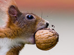 A Yummy Nut From The Nut Tree
