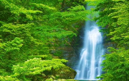 Waterfall - forest, waterfall, nature, tree