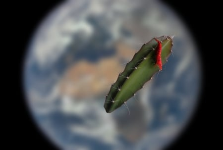 Shrimp in Orbit - iss, science, shrimp, technology, plant, animal, earth, planet, orbit, space, fish, cactus, nasa, nature