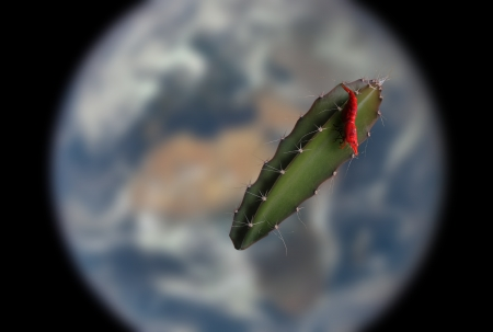 Shrimp in Orbit - orbit, fish, space, plant, technology, cactus, animal, shrimp, planet, nasa, science, iss, nature, earth