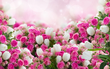 Pink white flowers flowers nature background wallpapers on pink white flowers mightylinksfo