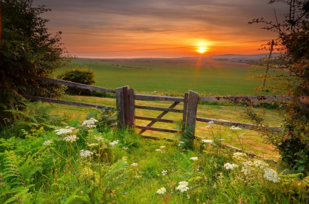 Summer field at sunrise - fence, glow, grass, sunlight, beautiful, sunset, sky, rays, wildflowers, summer, sunrise, sunshine, morning, field, meadow