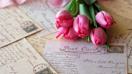 Postcard and Tulips - writings, roses, gift, birthday, still life, photography, post card, flowers, tulips, wishes