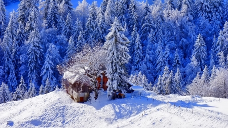 house on a mountain in winter - house, forest, winter, mountain