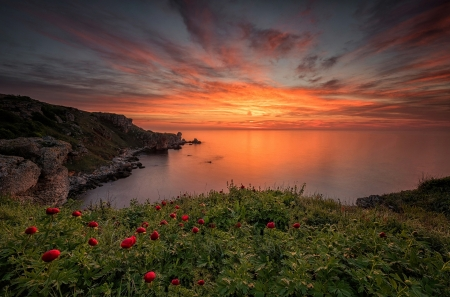 Sunset - view, flowers, nature, sunset, clouds, sky, sea, sea view