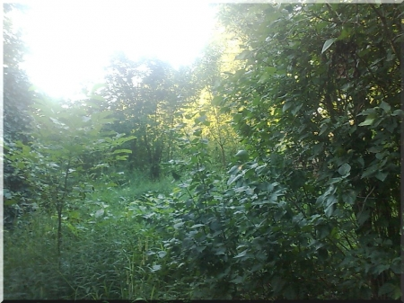 my home 2 - weed, grasses, green, jungle, tress, leaf tree, fruit trees, nature