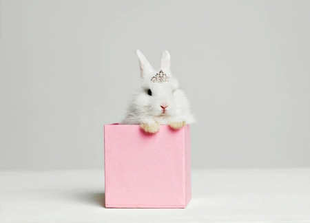 Bunny gift - rabbit, iepure, box, easter, valentine, gift, sweet, cute, bunny, tiara, white, princess, pink