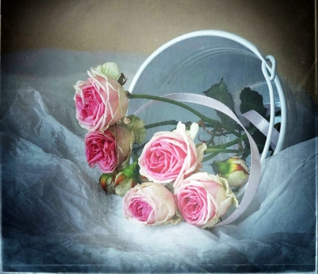 Pink roses - fresh, colors, soft, roses, freshness, bucket, gradient, flowers, beauty, nature, petals, pink, natural