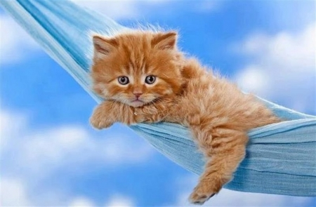 resting in a blue net - cute, resting, blue net, kitten, cats, animals