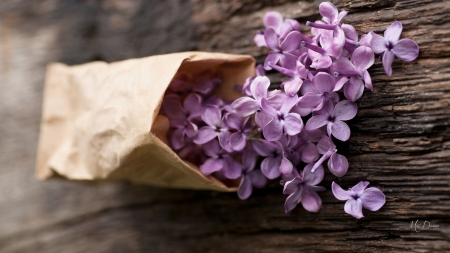 Bag of Blooms - fragrant, summer, flowers, spring, lilacs, wood, paper bag
