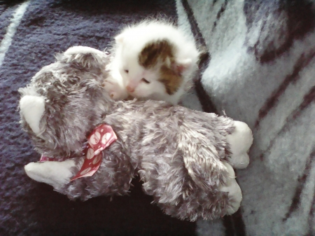 cute kitten - cute, kitten, gray, newborn