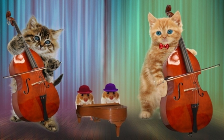 Funny band - luminos, hamster, band, cat, piano, cute, cello, instrument, funny, kitten, pisica