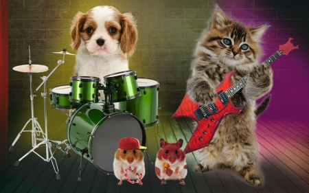Funny band - red, hamster, band, drum, animal, instrument, green, pisica, dog, puppy, caine, cat, hat, cute, guitar, funny, kitten