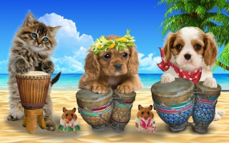 Cute drumers - red, hamster, band, drum, sea, animal, beach, instrument, pisica, dog, puppy, blue, luminos, hawaii, caine, cat, cute, summer, funny, kitten