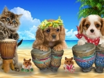 Cute drumers