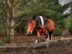 Horse in the Forest