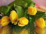 Yellow Wet Tulips