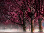 fabulous magenta forest in the mist