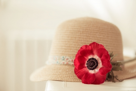 ღ - with love, flowers, nature, red flower, petals, hat