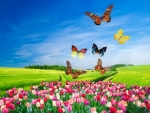 Butterflies over colorful field