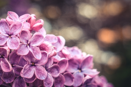 Bokeh - flowers, petals, nature, bokeh