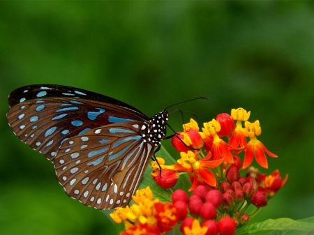 BUTTERFLY - Flowers, Petals, Colors, Wings