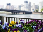 The Sumida River