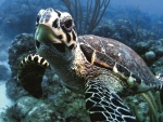 Sea Turtle Up Close