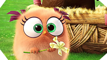 Hatchling Angry Birds Movies Entertainment Background Wallpapers On Desktop Nexus Image 2126450