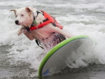 Surfing Dog :)