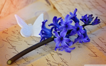 Beautiful Purple hyacinth and his butterfly thoughts - butterfly, purple, macro, flower, nature, blue, letter