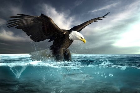 eagle diving for fish birds \u0026 animals background wallpapers oneagle diving for fish