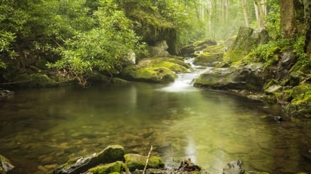 Great Smoky Mountains National Park - forest, stream, cascades, nature, trees, wood
