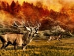 Elk Running From Forest Fire
