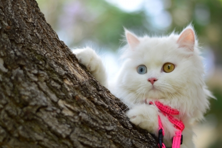 Adorable Cat ♥ - cute, photography, blue eye, white cat, adorable, cat