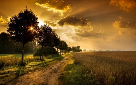 Gorgeous sunset - habitats, grass, sunset, twilight, country, trees, clouds, weather, flora, fauna, beauty, nature, sunshine, road