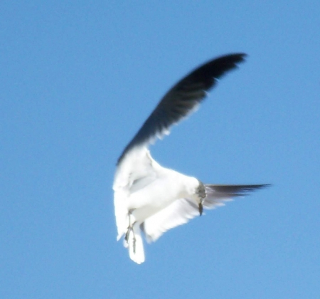 In mid flight