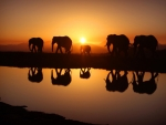 elephants silhouettes reflected in river