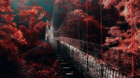 pedestrian hanging bridge in a red forest - forest, red, hanging, bridge
