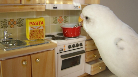chef bird - Funny & Entertainment Background Wallpapers on