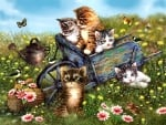 Kittens in Wheelbarrow F1Cmp