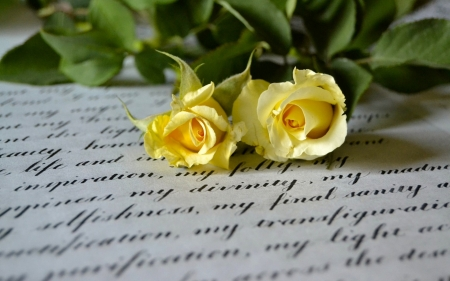 Two yellow roses - duo, splendor, rose, macro, yellow rose, letter, style