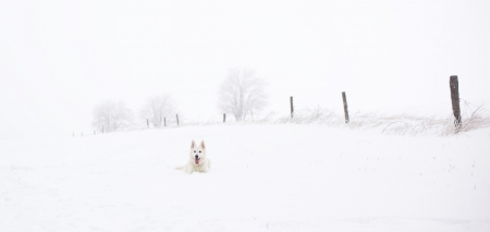 ♥ - photography, snow, ws, nature, dog