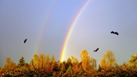Autumn Double Rainbow - rainbows, fall, eagles, sky, Firefox Persona theme, trees, country, autumn