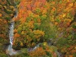 aerial view of mountain stream in autumn