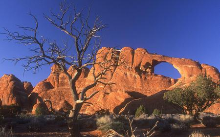 Desert - deserts, nature
